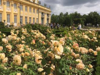 The rose garden in summer